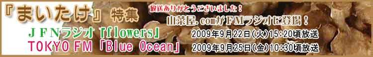 山菜屋.comがFMラジオに登場