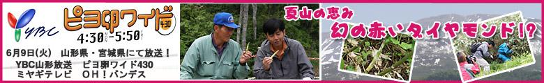 YBC山形放送 ミヤギテレビ 夏山の恵み 幻の赤いダイヤモンド!?