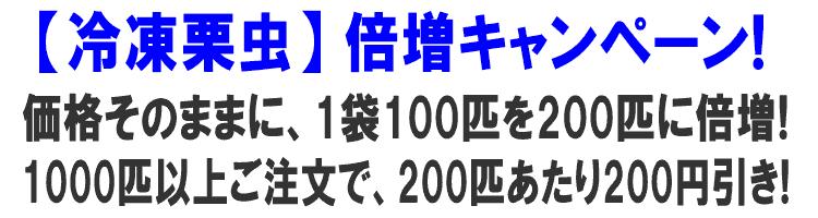 倍増キャンペーン実施中!