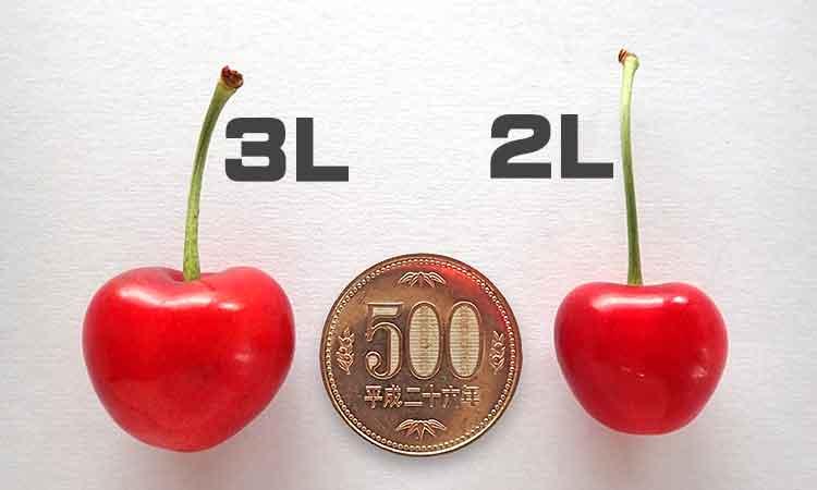 紅秀峰 3L-2Lサイズ比較