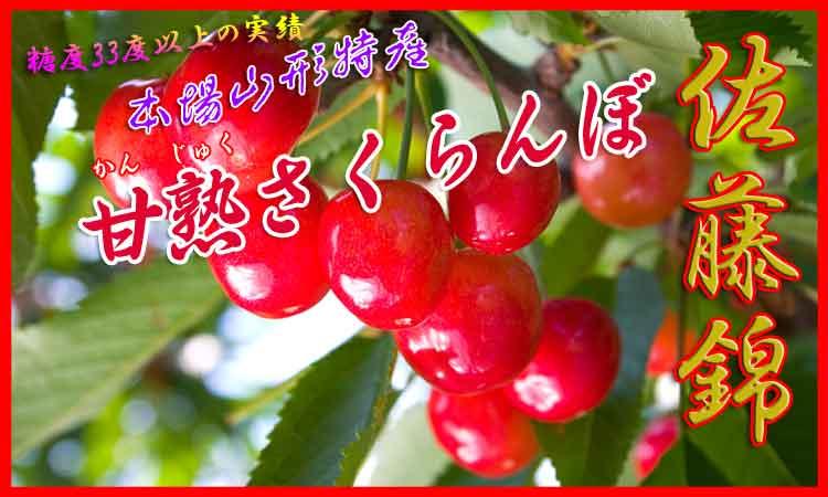 本場山形特産 甘熟さくらんぼ 佐藤錦