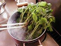 大きめの鍋にお湯を沸騰させ、あいこの根本を下にして入れます。