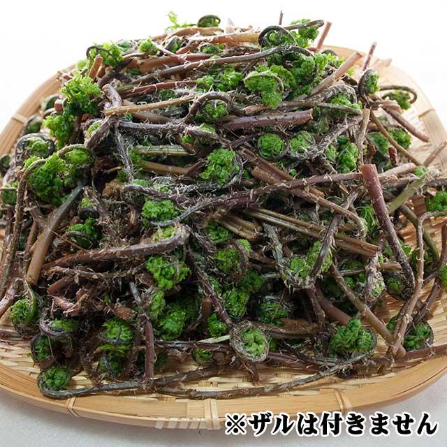 天然赤こごみ 500g(5月上旬お届け品)