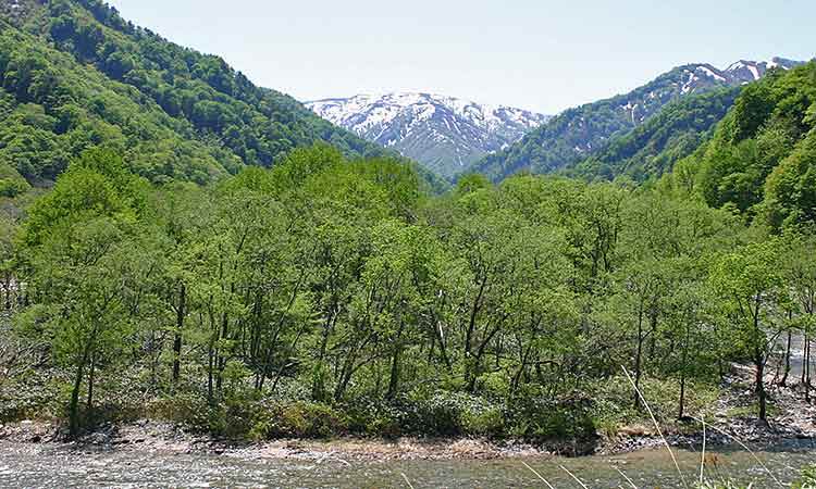 自然溢れる月山周辺の山