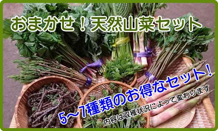 天然山菜セット