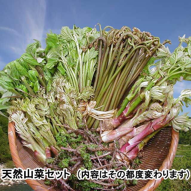 おまかせ!天然山菜 4月下旬お届けセット