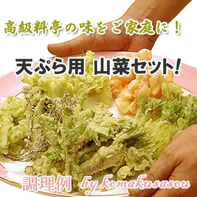 天ぷら用山菜 5月中下旬お届けセット