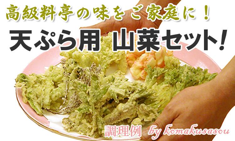天ぷら料理に向く山菜3~4種類を、その日収穫された中から厳選してお届け!
