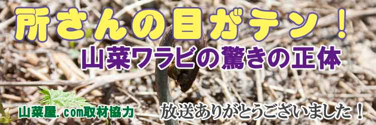 山菜ワラビの驚きの正体