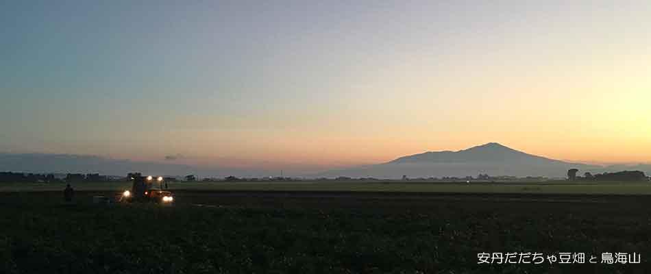 安丹だだちゃ豆畑と鳥海山